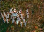 Yıldız Tilbe şarkıları Dillere Destan klibi video klipleri şarkı klip sözleri dinle izle